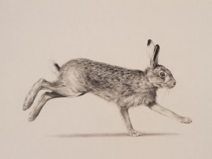 'Running Hare' by Jonathan Pointer