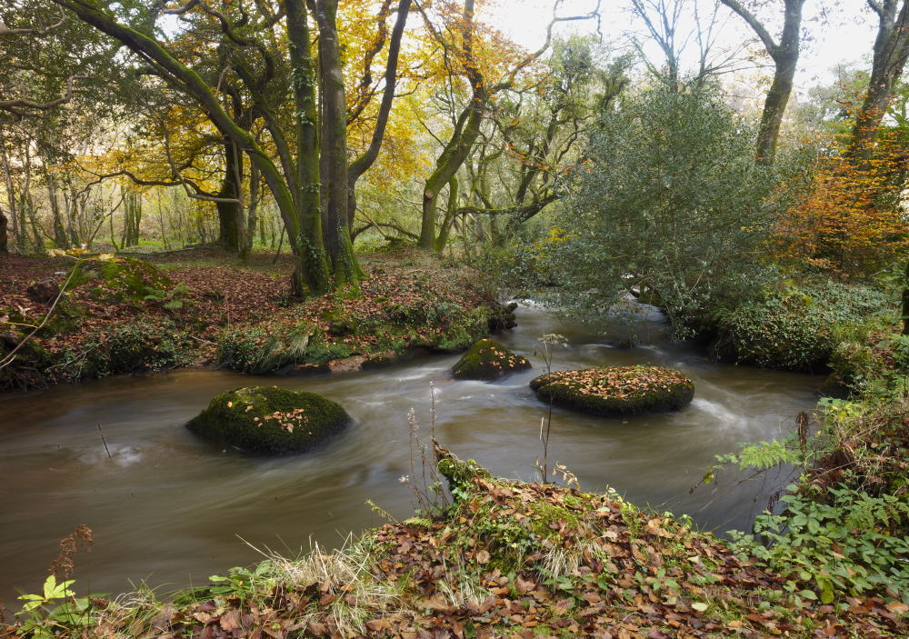 Could Salmon be returning to the River Par in Cornwall?