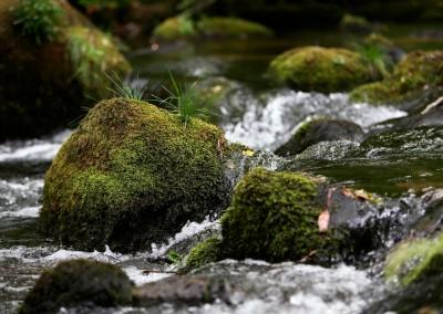 River Memories