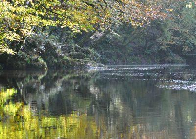 Halcyon river days