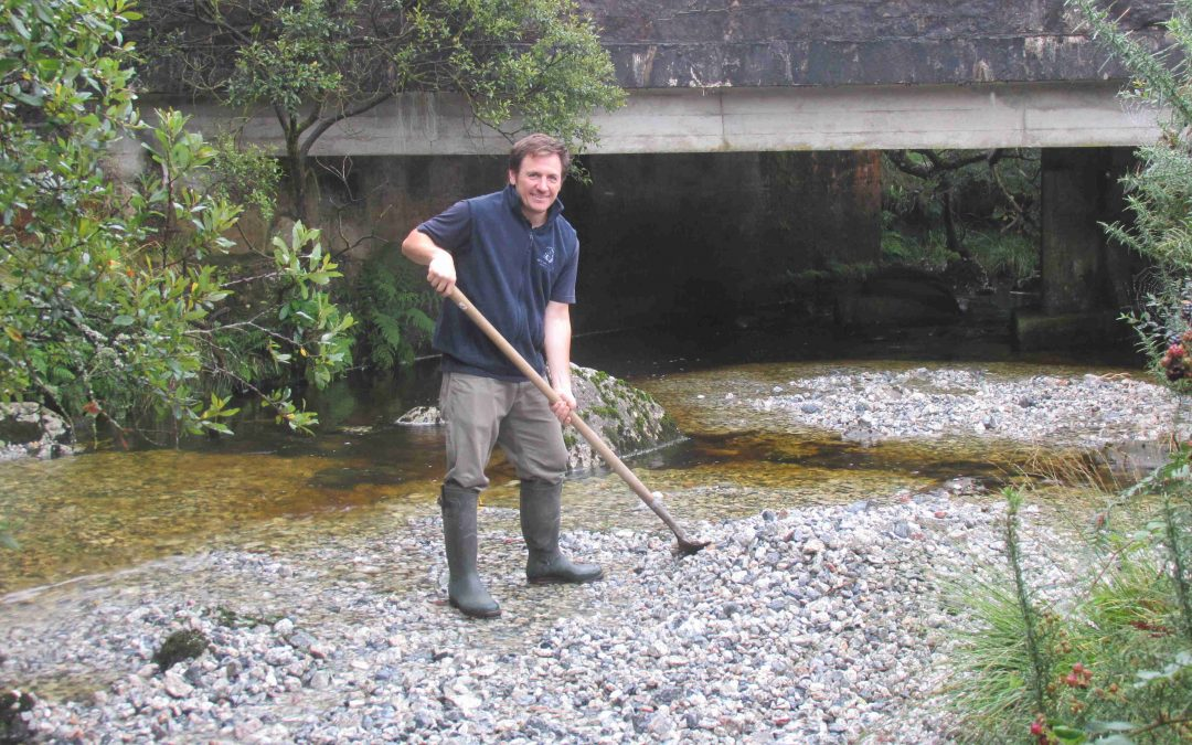 Gravel bringing salmon back to Devon river