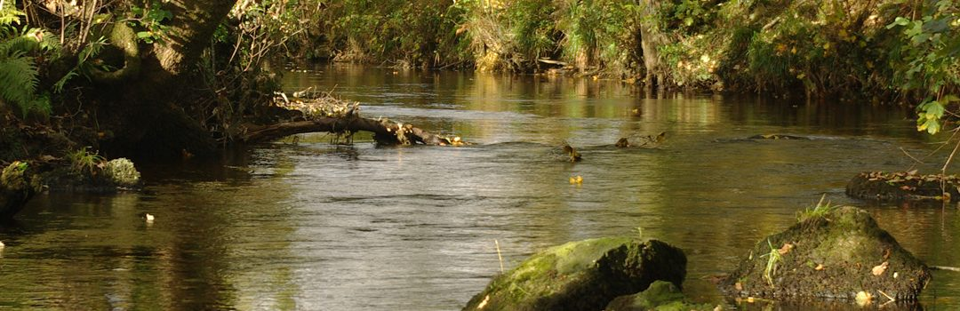 Soil & Salmon: Keeping soil on the land to save our salmon