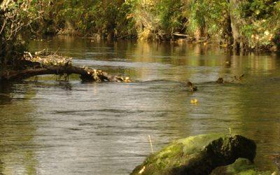 Soil & Salmon: Keeping soil on the land to save our salmon
