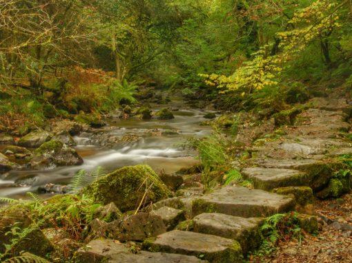 Rivers Torridge & Okement