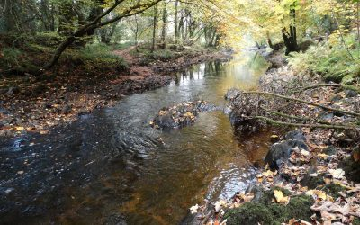 River Clean ups