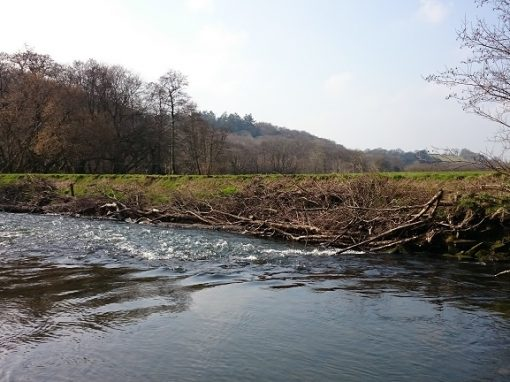 River Restoration: Why We're Adding Woody Material