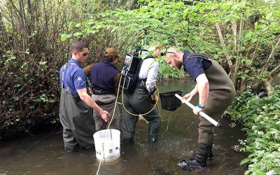 Electrofishing Internship 2018
