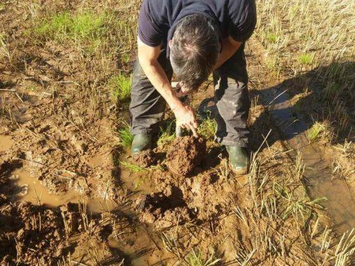 Soils and Natural Flood Management