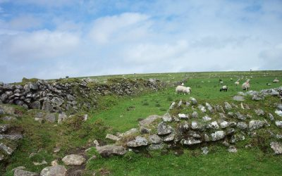 Dartmoor farmers requested to participate in sheep scab research and treatment