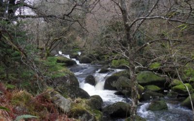 Woodlands – Water – Fisheries Workshop
