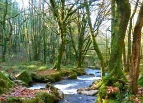 Sustainable Woodlands and River Management