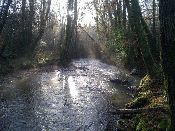 Restoring floodplain function on the Yealm