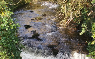 Town Council approves proposed weir improvements on River Camel