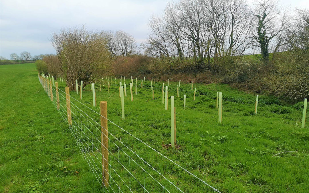 Tree planting in north Cornwall aims to help improve water quality and prevent flooding.