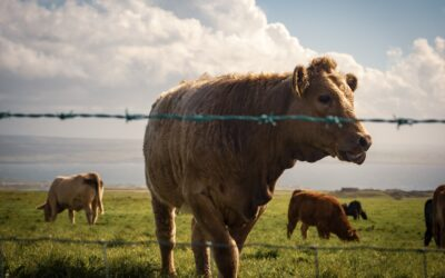 The life of cows to play a part in innovate water quality project