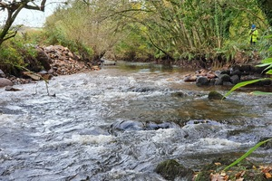 Successful restoration of Cornwall's River Camel