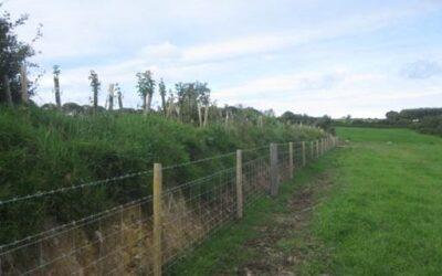 Woodland planting offer – deadline coming up