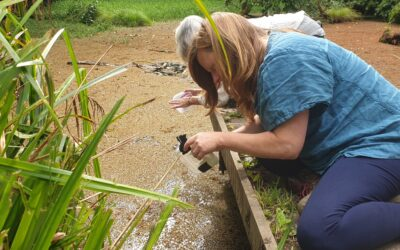 Non-native weevils help to clear Budshead pond of an invasive plant.