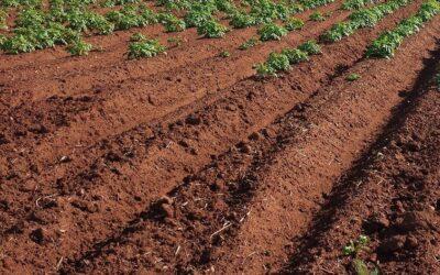 England's action plan for soils announced